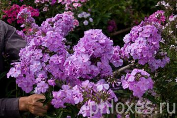 Lilac TimeIMG_3154